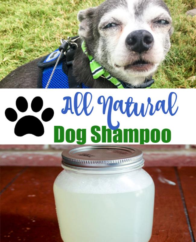 Homemade All Natural Dog Shampoo