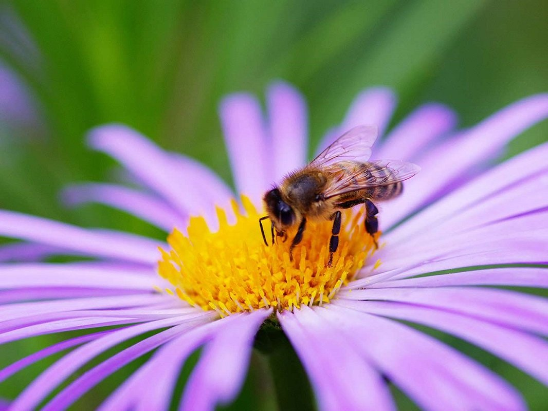 FREE Bee Friendly Flower Seeds – First 1,000 so Request Now!