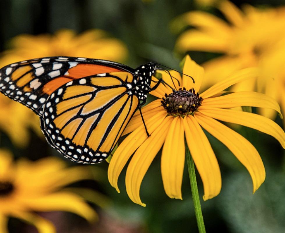 free pollinator flower seed packet