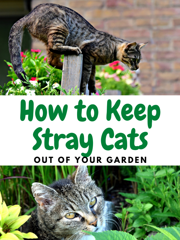 How to Keep Cats Away From Your Garden