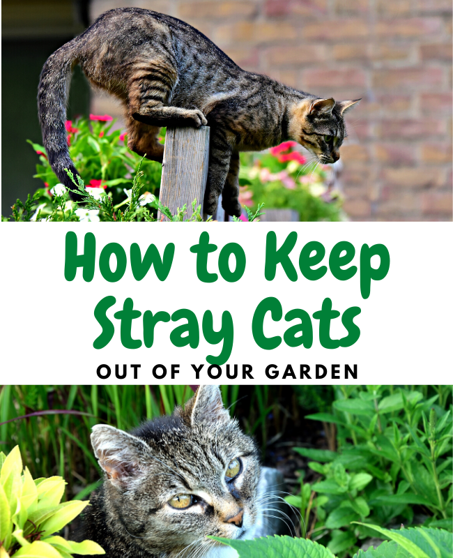 How to Keep Cats Away From Your Garden: Natural Tips!