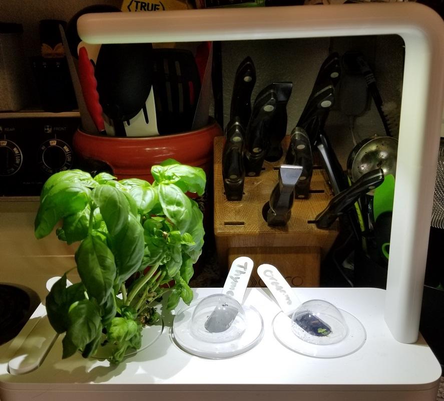 click & grow indoor garden
