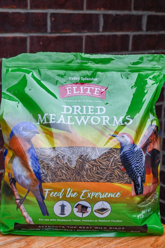 dried mealworms - What Do Birds Eat
