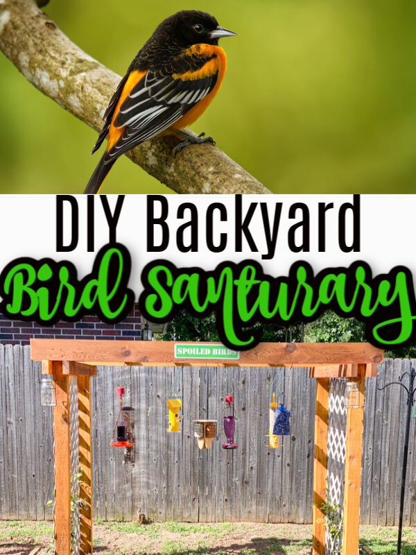 DIY Bird Sanctuary – How to Build Your Own