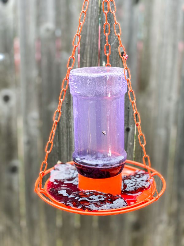jelly feeder