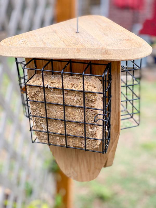 suet feeder -What Do Birds Eat