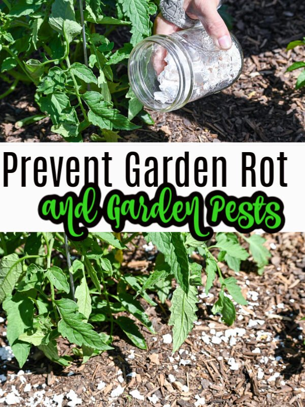 Garden Hack: How to Prevent Blossom Rot & Garden Pests