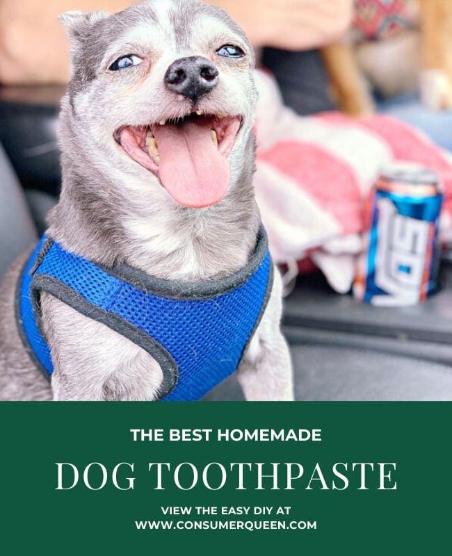 Homemade Toothpaste for Dogs Pinterest