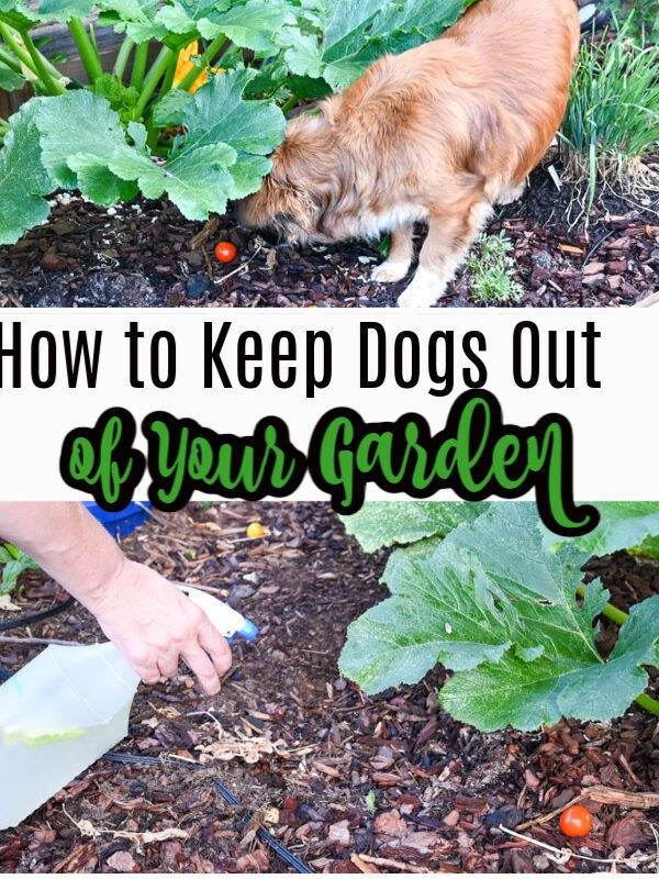 How to Keep Your Dog Out of Your Garden