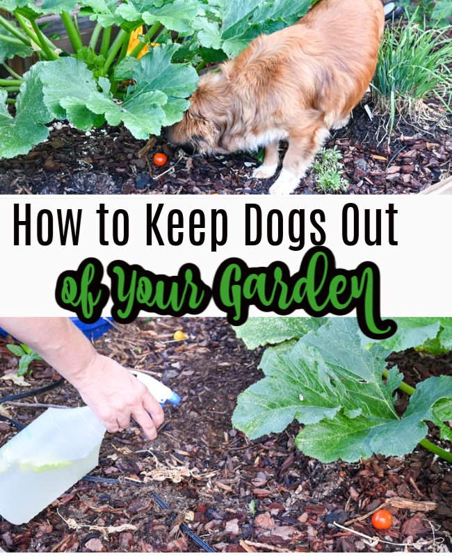 How to Keep Dogs Out of Your Garden