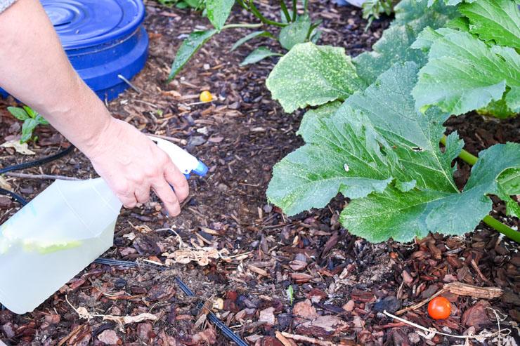 Garden Spray for Pets