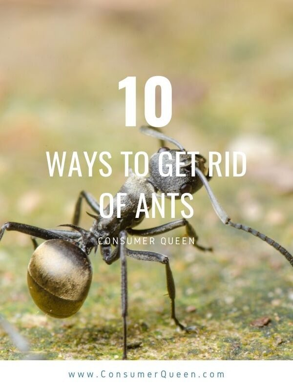 Get rid of ants in the garden Pinterest