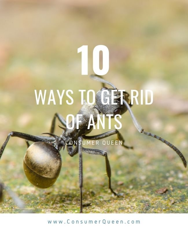 Natural Ant Killer Pinterest Photo