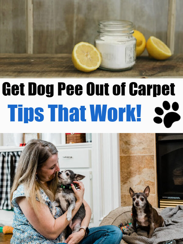 Tips top get dog pee out of carpet