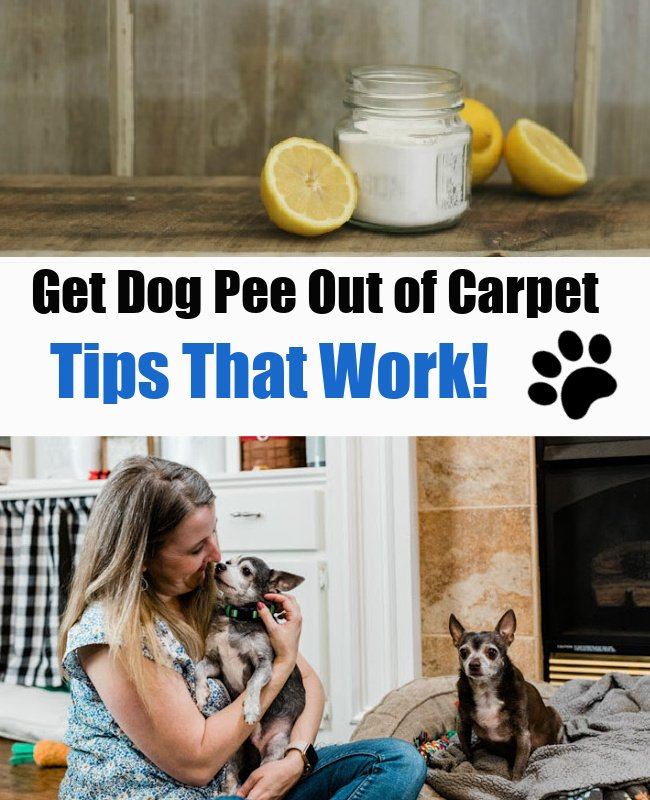 How to Clean Dog Pee out of Carpet
