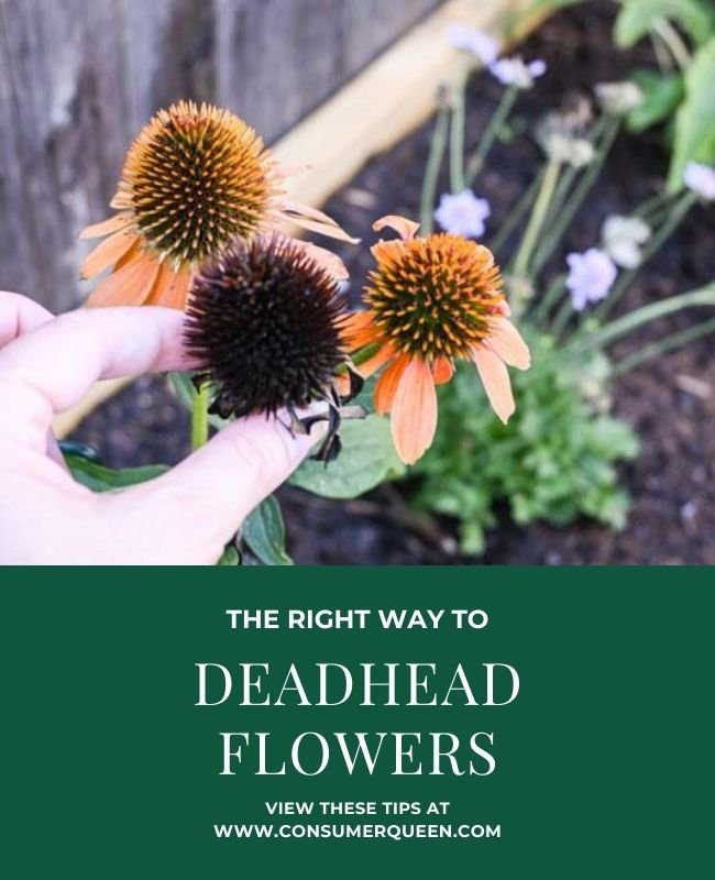 The Right Way to DeadHead Flowers