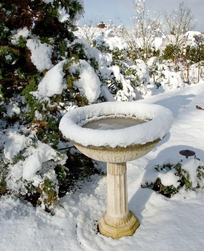 Bird Bath Winter