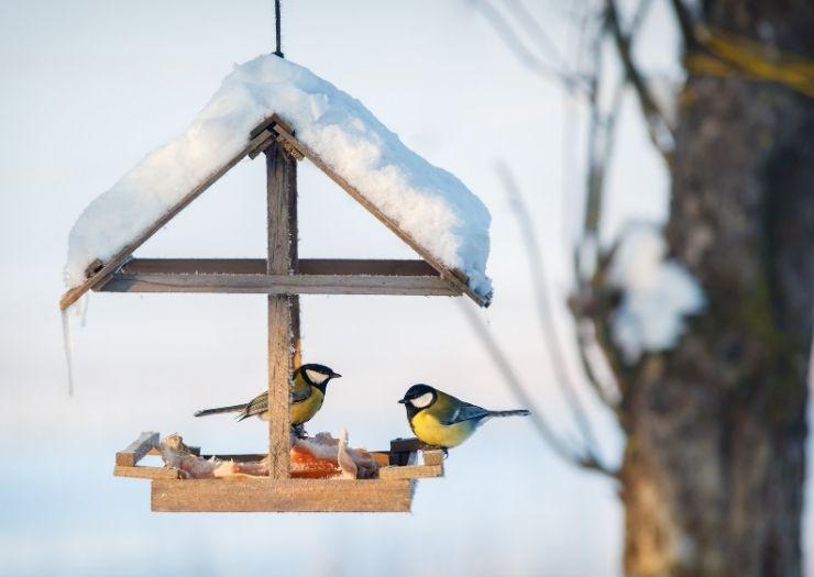 Bird Feeder Finch Winter