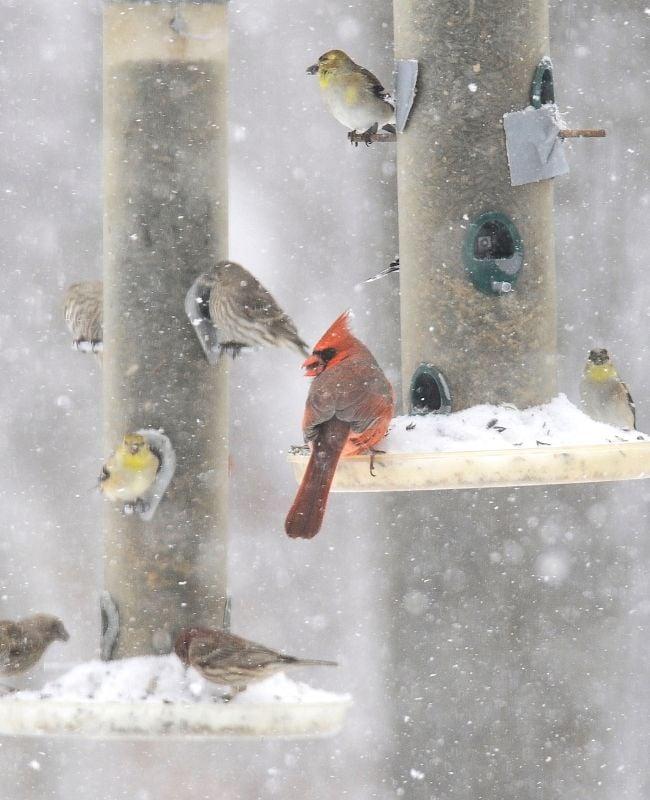 Feeding Backyard Birds In Winter