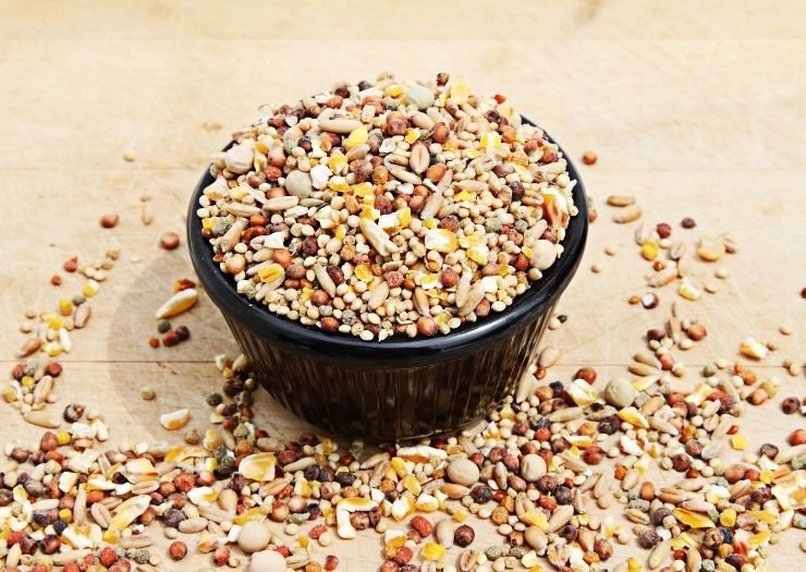 Bird Seed in Microwave safe Bowl