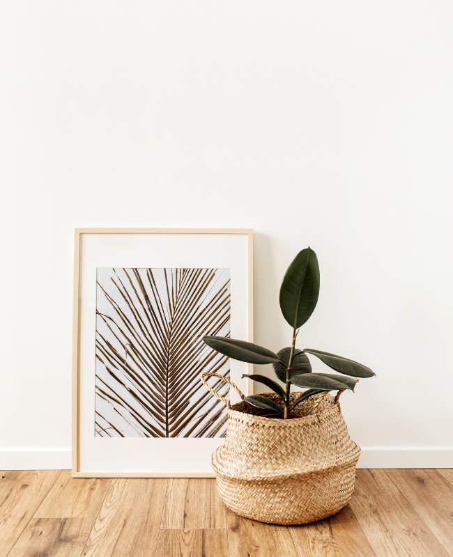 House Plants -sustainable living