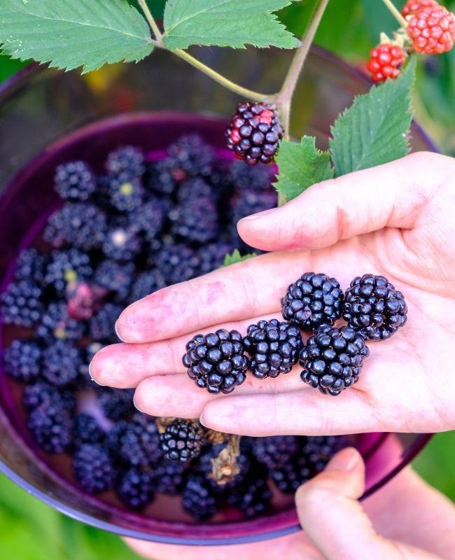 How to Start Fruit Gardening