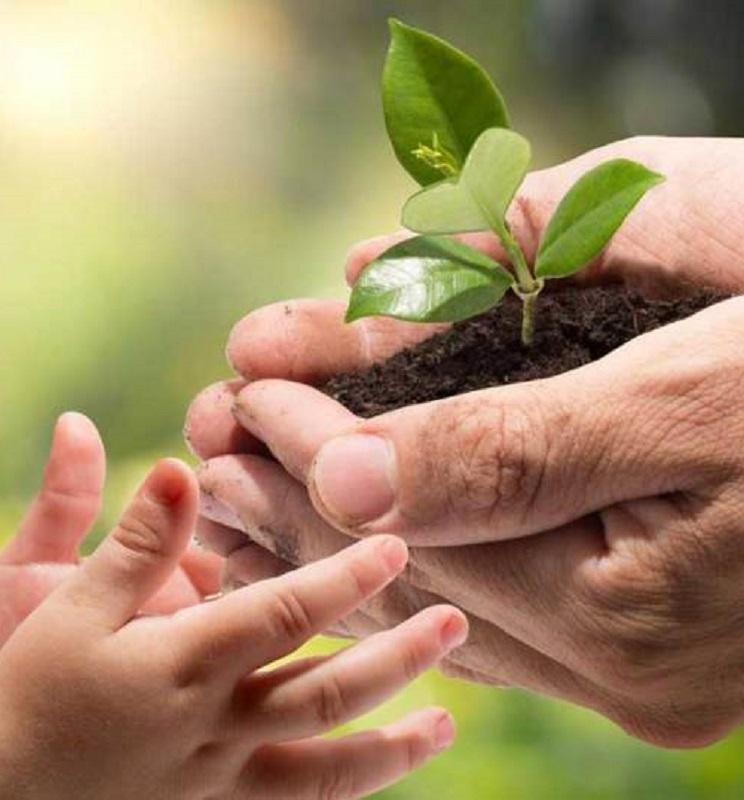 Free Wildflower Seeds or Tree Seedling (First 175,000)