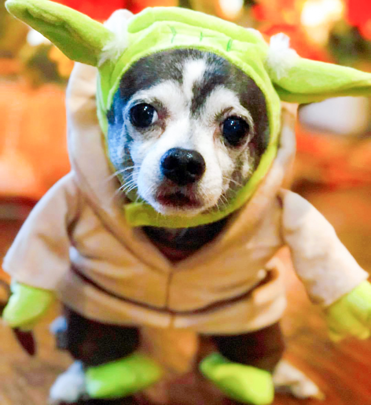 Boomer Yoda - Star Wars Dog Names