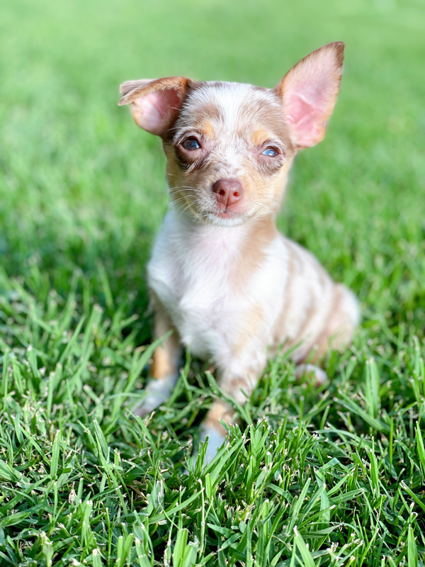 Matilda Jane Puppy -The Cutest Puppy Names for Girls