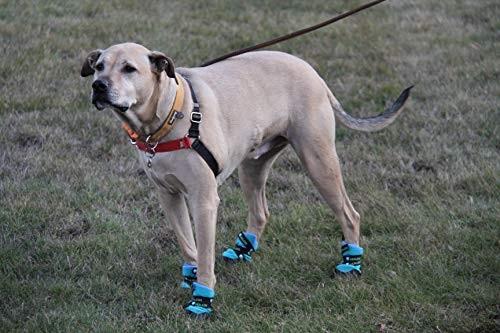 Healers Pet Socks