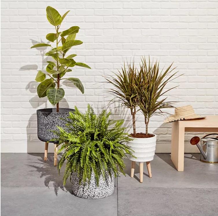 Macys planter collection