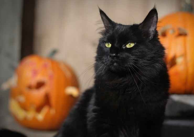 100 Fun and Spooky Halloween Names for Cats
